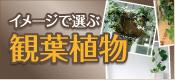 イメージで選ぶ観葉植物