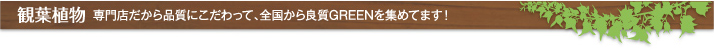 観葉植物 専門店だから品質にこだわって。全国から良質GREENを集めてます!