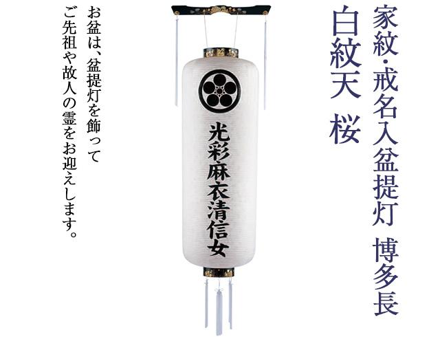 家紋・戒名入 盆提灯 博多長 白紋天 桜 9992-0