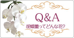 胡蝶蘭Q&A