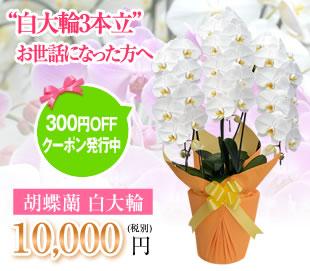 胡蝶蘭10000円