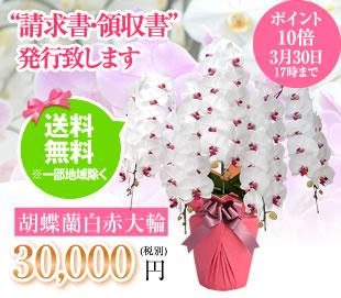 胡蝶蘭30000円
