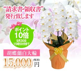 胡蝶蘭15000円