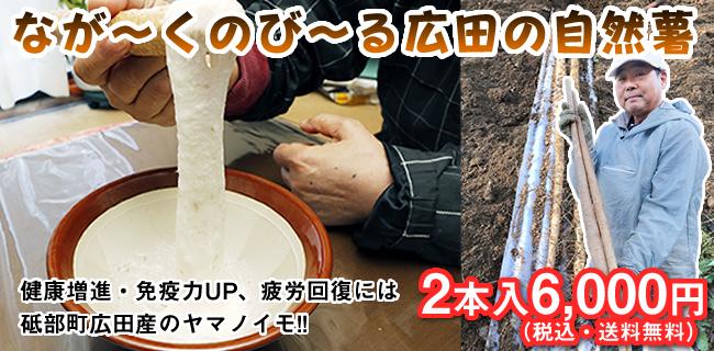 砥部町広田の自然薯