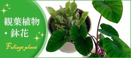 観葉植物・鉢花