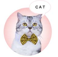 猫 ランキング