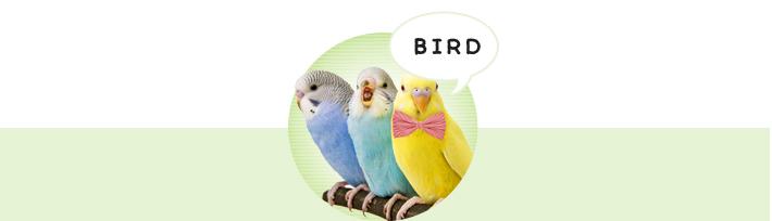 鳥 ランキング