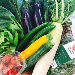 SHONAI ROOTS旬のこだわり野菜セット約3kg(葉物・根菜・果菜類)