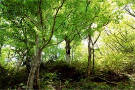 2.環境のふるさと応援事業