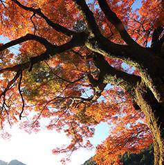 古座川の環境保全に関する事業