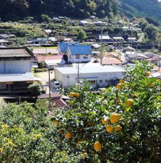 集落の維持活性化に関する事業