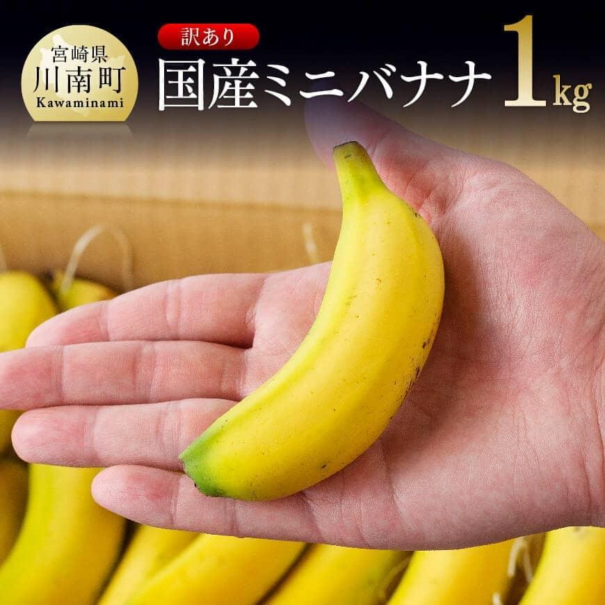 【訳あり】貴重!国産ミニバナナ1kg