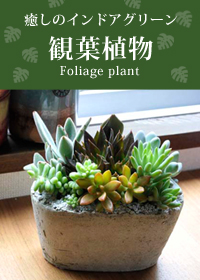 観葉植物特集