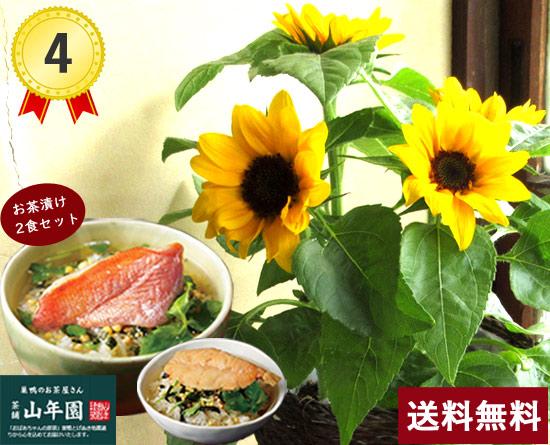 \4位/ヒマワリ花鉢&お茶漬けセット