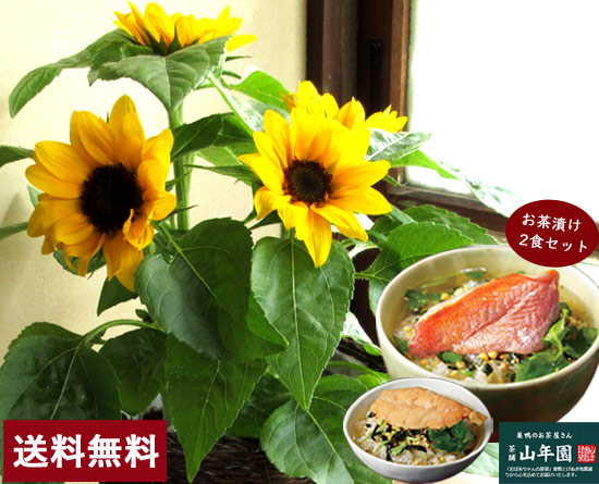 ヒマワリ&お茶漬けセット