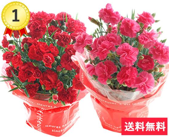 \1位/定番♪選べる花色カーネーション 花言葉は「母への愛」