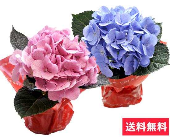 母の日ギフト 選べる花鉢&リース あじさいの花言葉「一家だんらん」