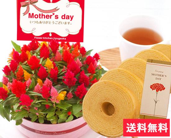 カラフルなケイトウケーキ花鉢とミニバウムクーヘンのスイーツのセット♪