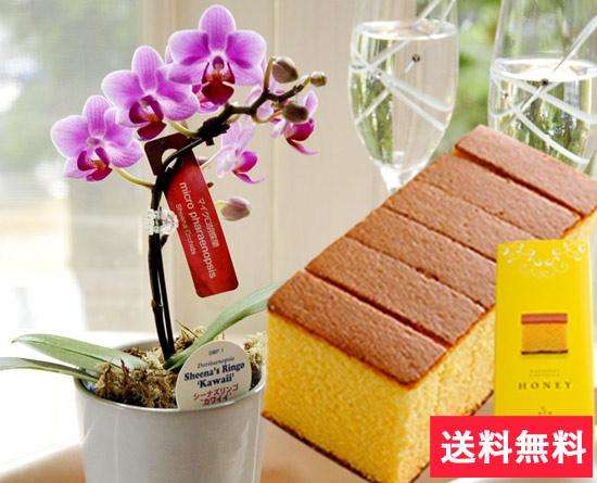 マイクロ胡蝶蘭ピンク系とスイーツのセット お部屋に置きやすいコンパクトサイズ♪