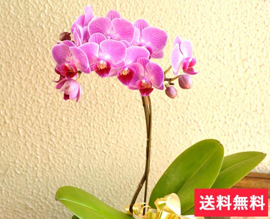 母の日 選べるフラワーギフト 胡蝶蘭の花言葉「幸福が飛んでくる」