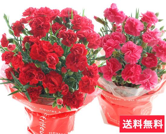 やっぱり定番♪母の日カーネーション・花言葉は「母への愛」