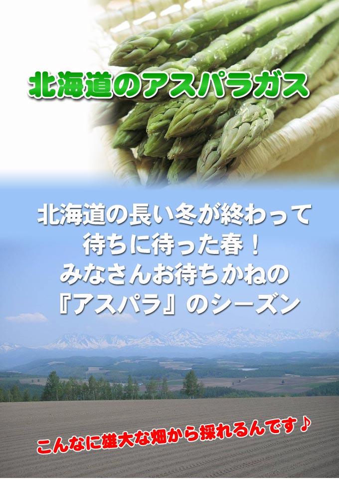 北海道のアスパラガス 北海道の長い冬が終わって待ちに待った春! みなさんお待ちかねの『アスパラ』のシ−ズン