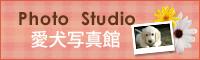 Photo Studio 愛犬写真館