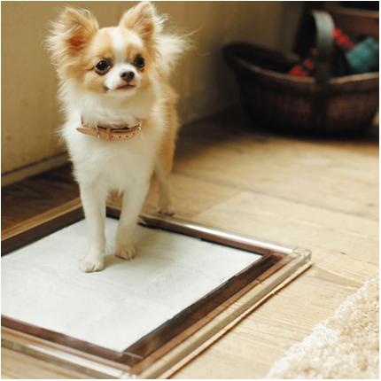 ワンタッチマグネット付 アクリル犬用トイレ