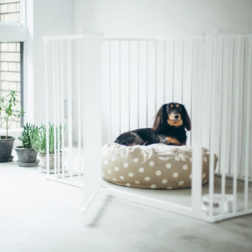 北欧スタイル BabyDan社とScandinavian Pet Designについて