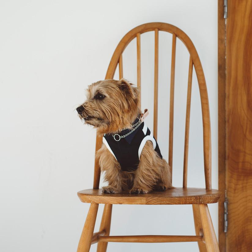 犬服,日本製,ラガーシャツ