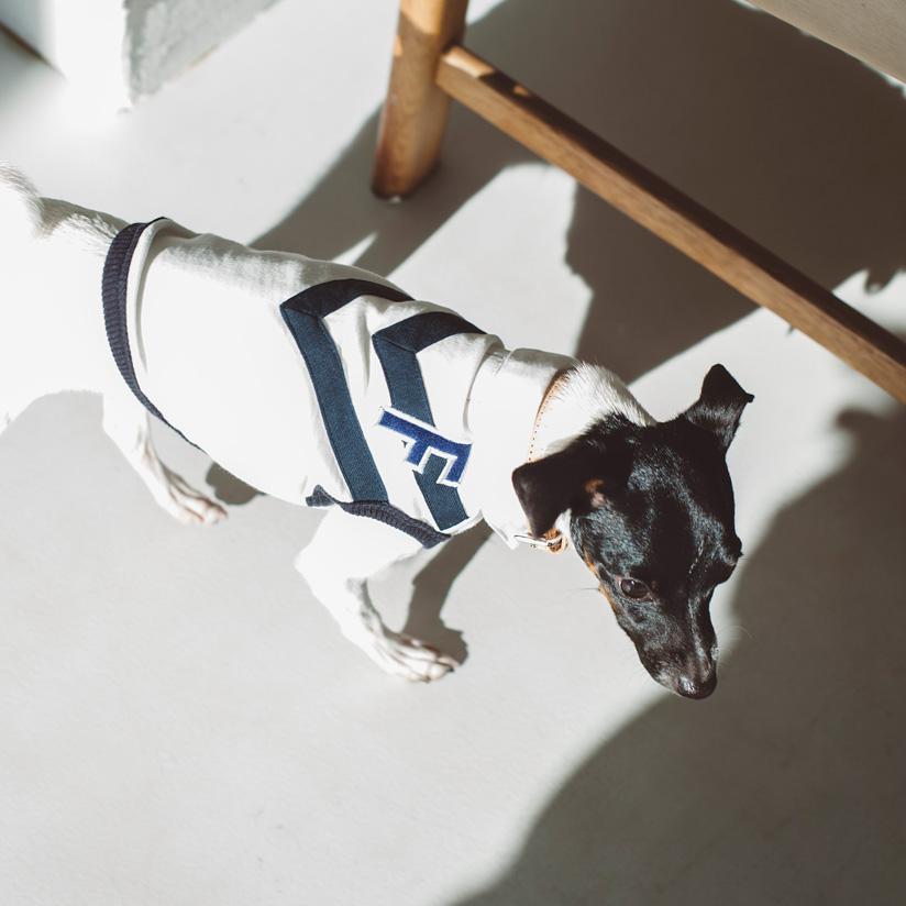 襟付きシャツ,おしゃれ着,犬 服,スポーツ