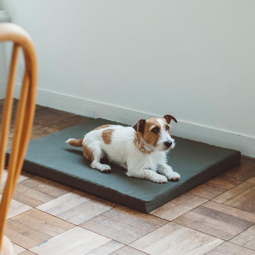 中型犬,ドッグ,ふわふわのベッド width=