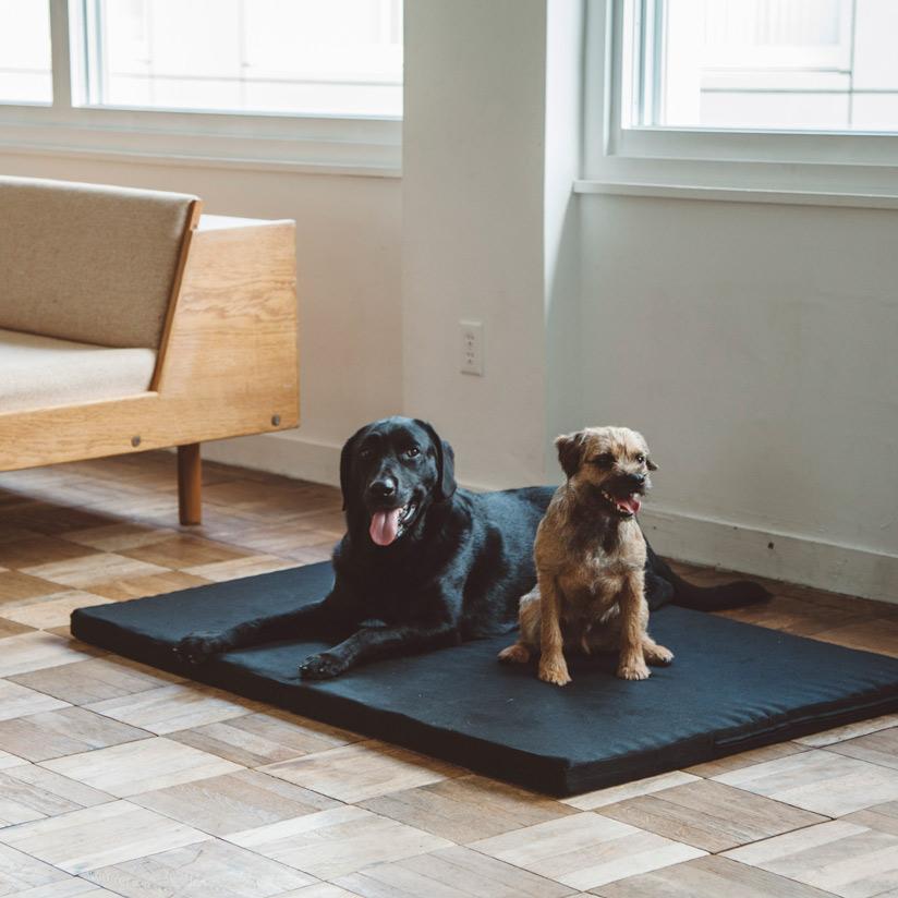 大型犬にぴったりなベッド,カジュアルな犬のベッド