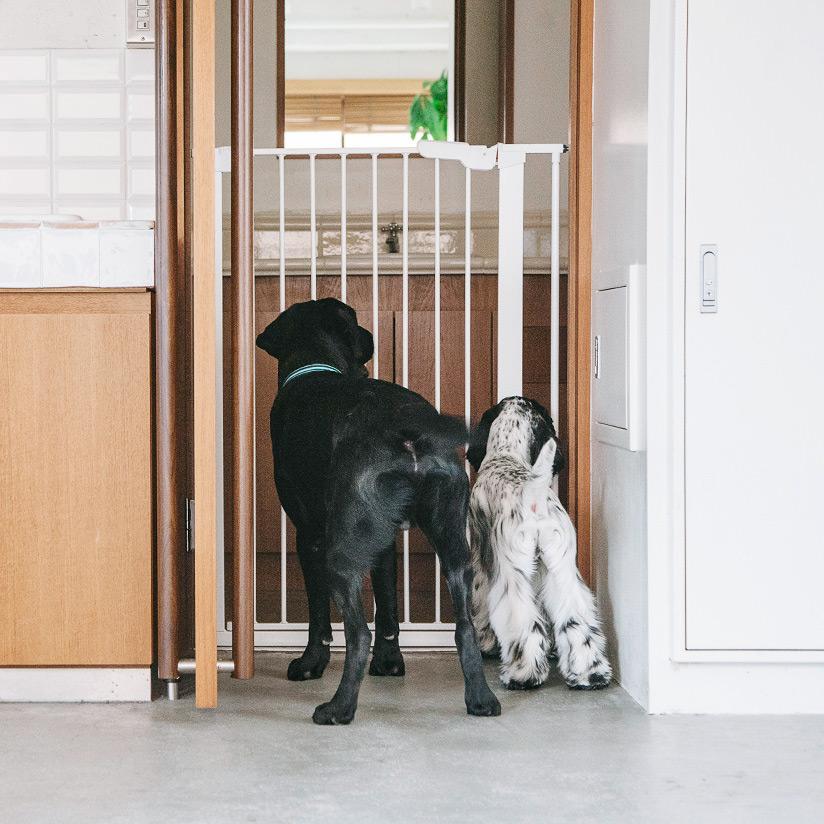 北欧大型犬,ゲート