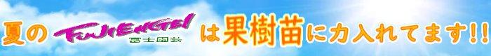 夏の富士園芸は果樹苗に力入れてます!