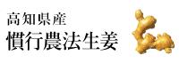 高知県土佐一生姜