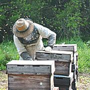 青木養蜂場