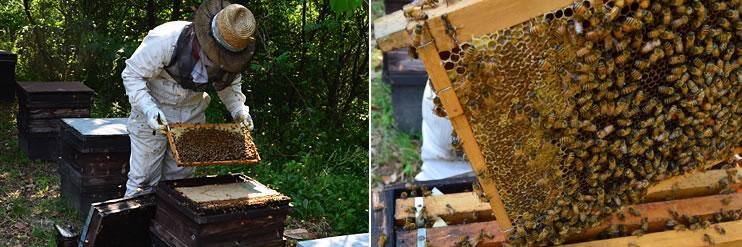 みかん蜂蜜養蜂の様子4