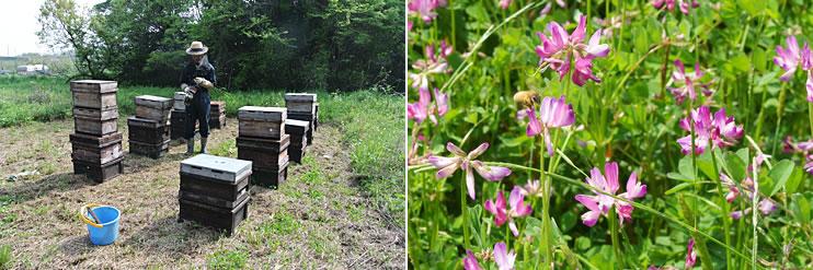 れんげ蜂蜜養蜂の様子2