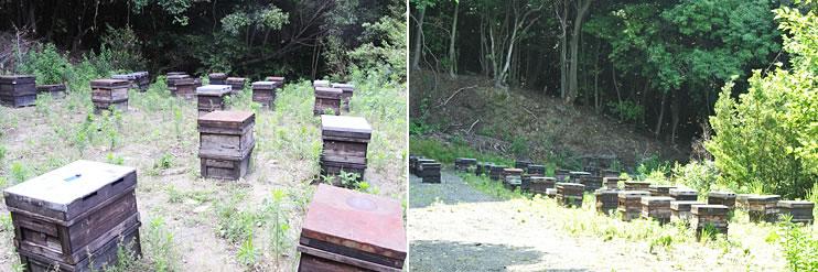 巣みつ養蜂の様子3