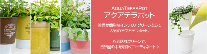 アクアテラポット インテリアグリーン 観葉植物
