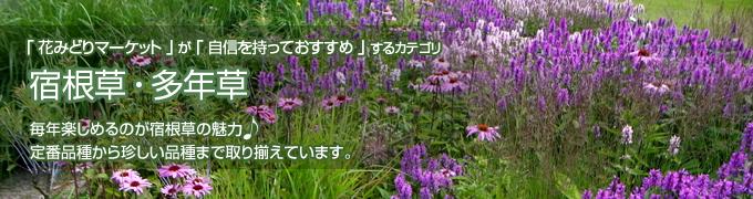 宿根草・多年草 寄せ植え