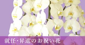 就任・昇進のお祝い花