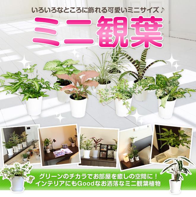 ミニ観LP1