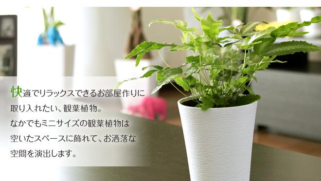 ミニ観LP2