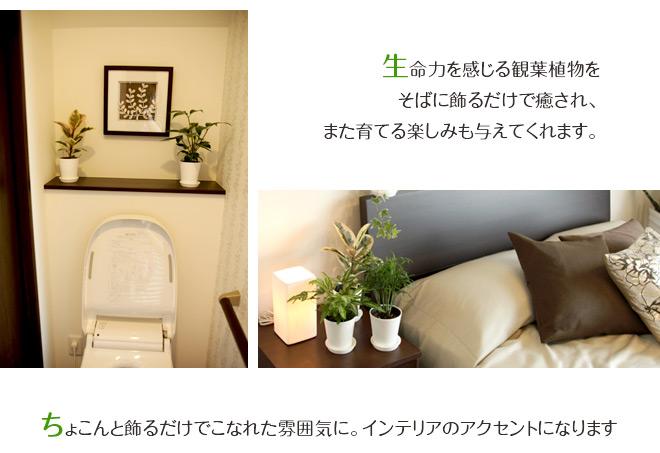 ミニ観LP3