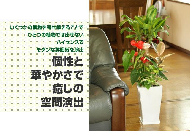 yu_03.jpg