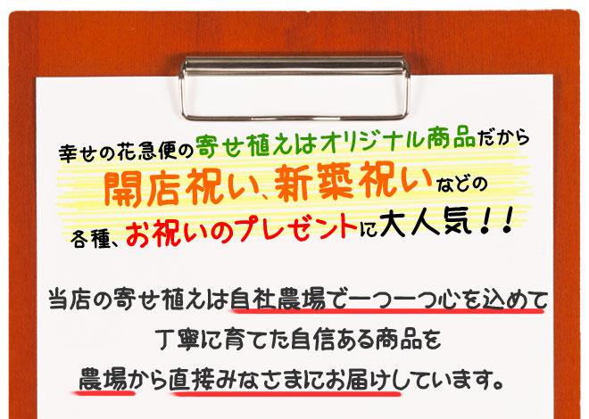 yu_04.jpg