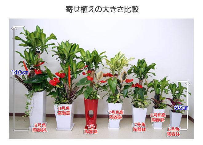yu_15.jpg