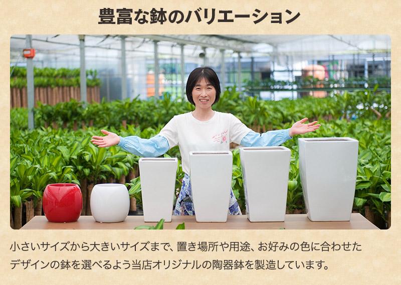 豊富な鉢のバリエーション